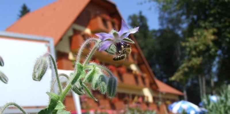 Posvet za tržno usmerjene čebelarje