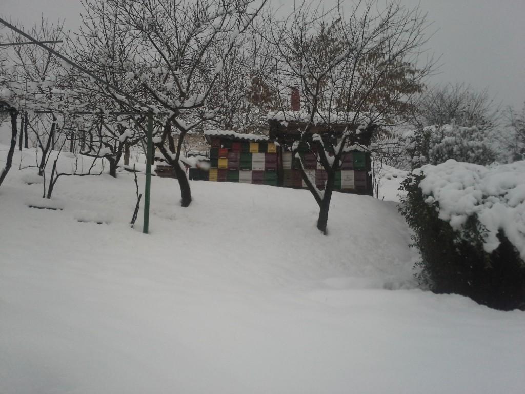 Čebeljnjak februar 2018