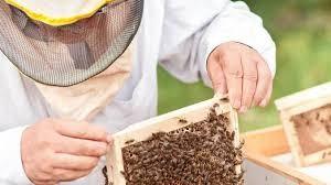 Postani čebelar